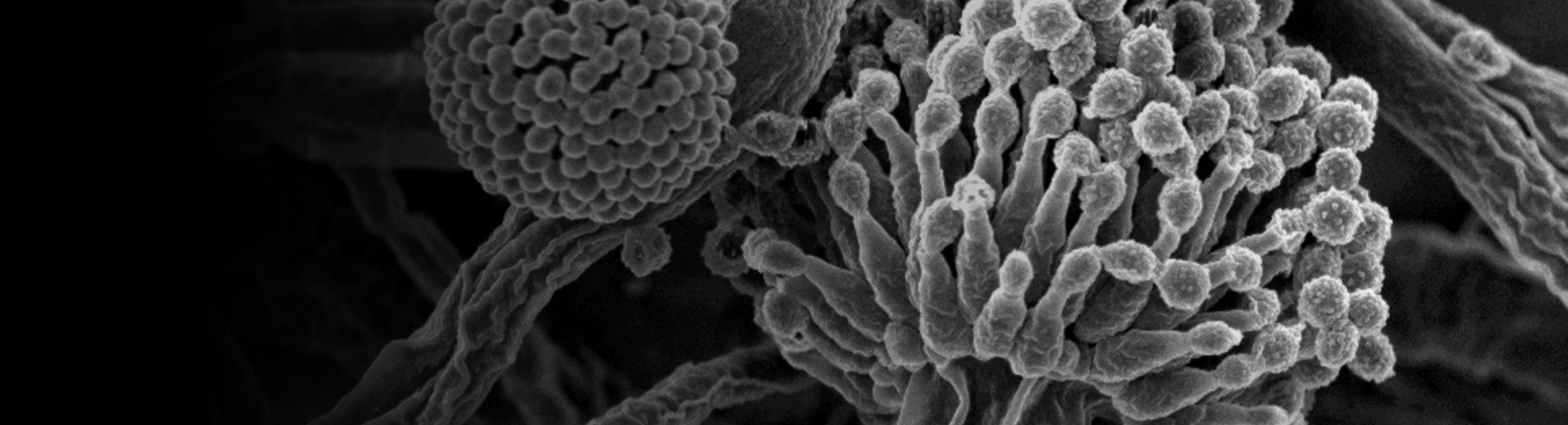 Fungus Resistance Testing